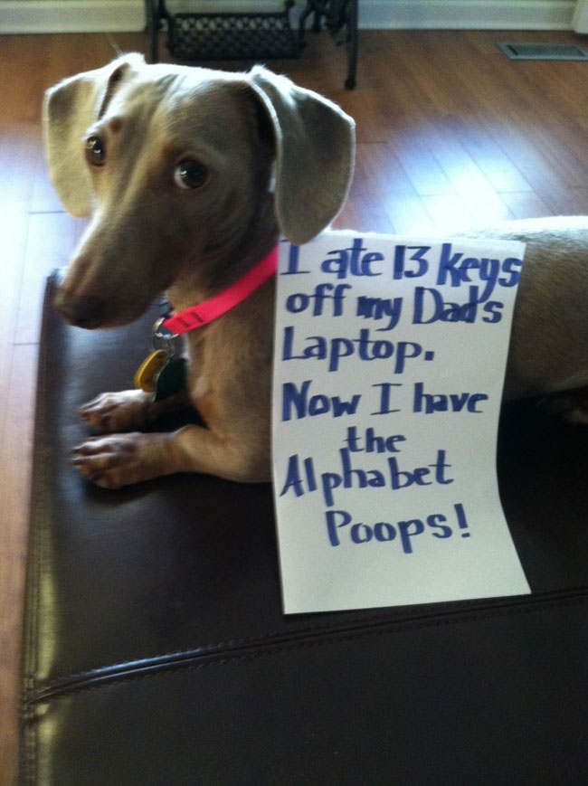 dogs-who-are-shamelessly-proud-of-what-they-just-did-18