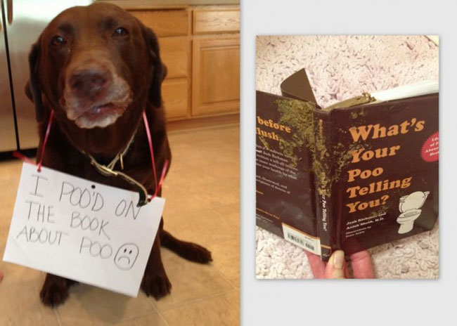 dogs-who-are-shamelessly-proud-of-what-they-just-did-27